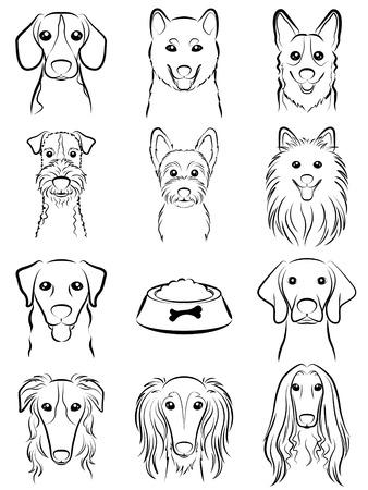 borzoi: Dog  Line drawing