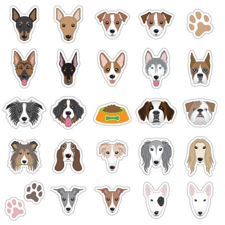shetlander: Illustraties van hond gezicht