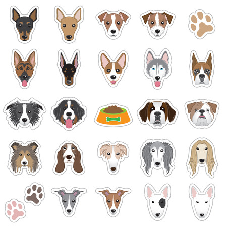 miniature collie: Illustrations of dog face Illustration