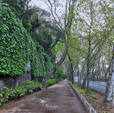 Pedestrian walkway between raw of trees and climber plants at Dolmabahce Street, Besiktas, istanbul, Turkey Stock Photo