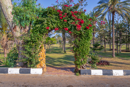 Natural rose garden arch covered with climbing plants at Montazah public park, Alexandria, Egypt Stock Photo