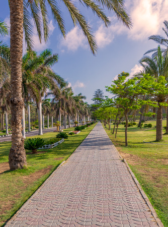 Pedestrian walkway framed with trees and palm trees on both sides with partly cloudy sky in a summer day, Montaza public park, Alexandria, Egypt