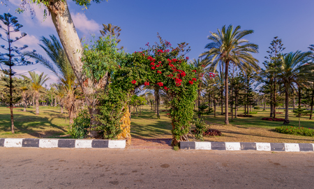 Natural rose garden arch covered by climbing plants at Montazah public park, Alexandria, Egypt