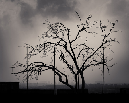 Silhouette shot of a single tree with cloudy sky at the citadel of Cairo, Egypt with skyline in the background Stock Photo - 127440634