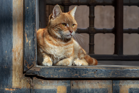 Orange color cat sitting in front of an old vintage window of historic house of Mostafa Gaafar El Selehdar, Cairo, Egypt Stock Photo - 127440798