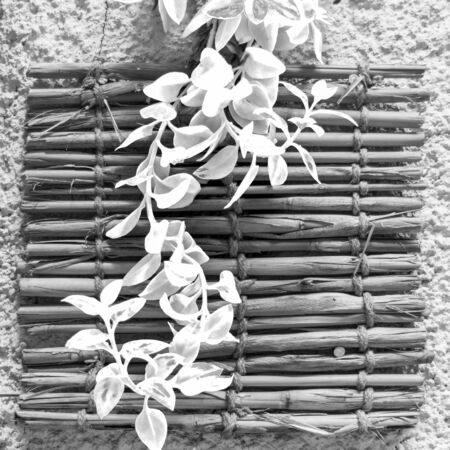 Black and white of fresh plant leaves over shabby bamboo decoration hanging on rough wall