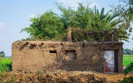 Exotic clay rocked house without windows with tropical green plants on roof at village on sunny day