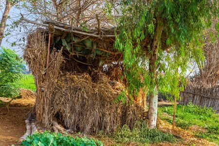 Exotic straw rocked hut with straw roof surrounded by tropical green trees and grass at traditional Egyptian village on sunny day