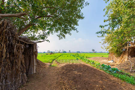 Green meadow, blue sky with few clouds framed by large green trees with few trees at the far end at traditional Egyptian village Stock Photo