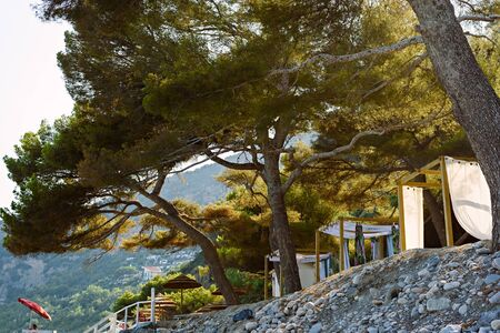 Private holiday cabins among the pines on the beach. Comfortable beach in Alassio, Italy