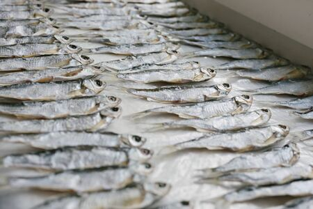 Fish, known as Ukleika (Alburnus alburnus), salted dries in rows. Pattern fish Stock Photo