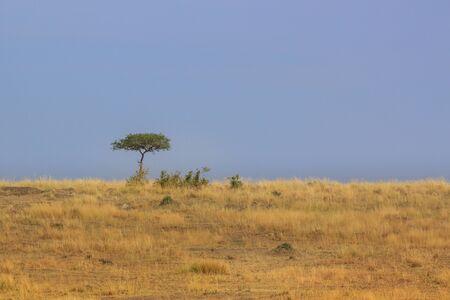 Single tree on the plains of the Masai Mara