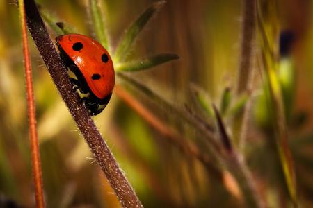 Ladybug crawling down a plant stem