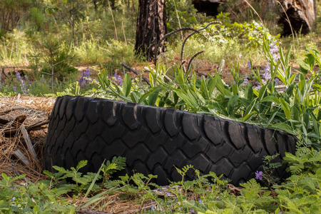 junky: Old tire abandoned in the forest