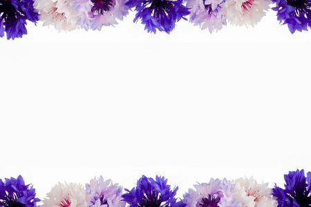 bordering: Bachelor button flowers bordering a white space for text Stock Photo