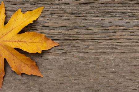 acer: Bligleaf maple (Acer macrophyllum) leaf on brown textured wood with copyspace