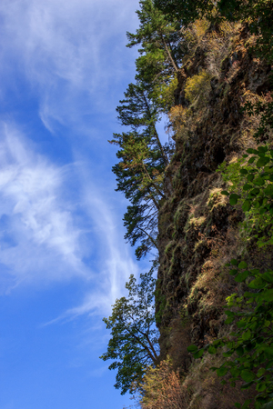 Trees living on the edge of a cliff against a blue sky, with copyspace