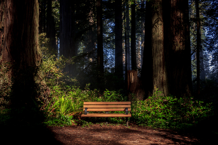 Early morning light shining on a bench in a foggy redwood (Sequoia sempervirens) forest Stock fotó - 118076366