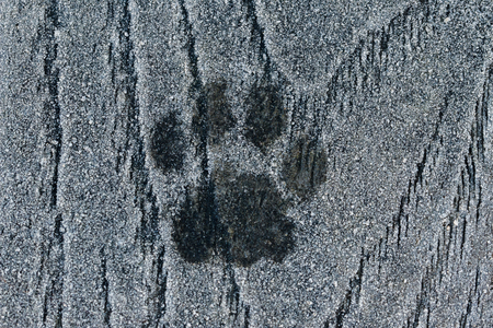 Cat paw print in the frost Stock Photo