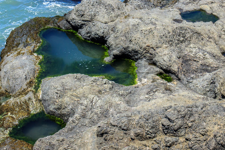 Closeup of a tidepool filled with water in the rocks by the ocean, rimmed with green algae.  The algae appears as a minerature underwater forest.