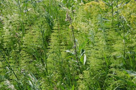 environmen: Different summer green grass closeup. Natural background