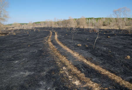 mounds: A dirt road crosses a charred rural pasture. The consequences of burning the grass. The burnt mounds of anthills.