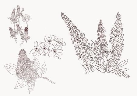 Flower set highly detailed hand drawn