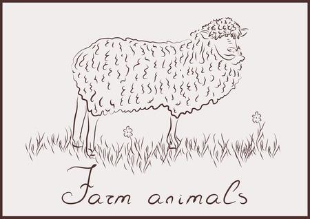 Domestic sheep Vector