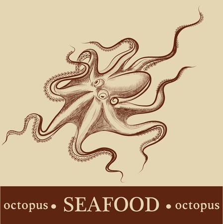 octopus. vector. detailed Vector