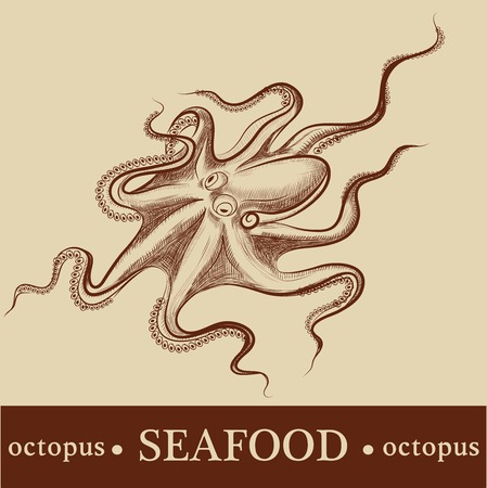 animal life: octopus. vector. detailed