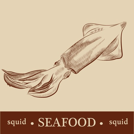 Vector Cartoon Squid