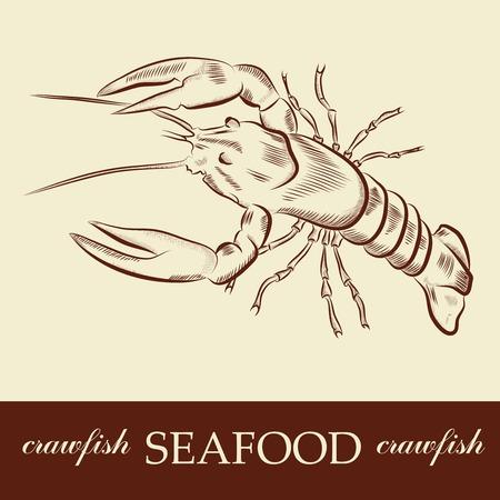 crawfish Illustration