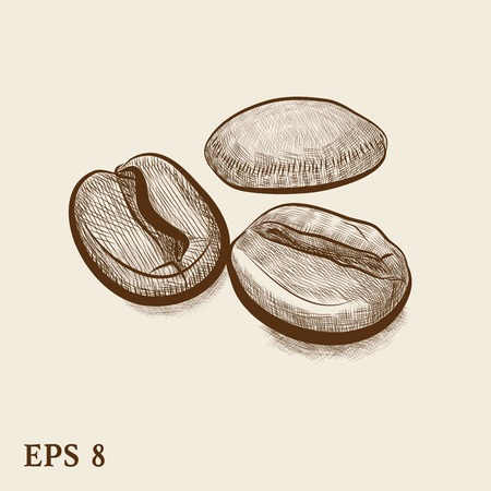 graver: Vintage coffee bean engraving vector illustration