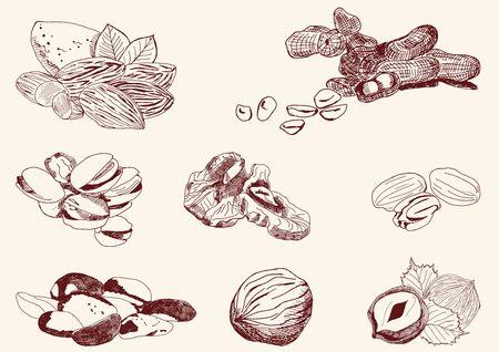 filberts: set of vector sketches Illustration