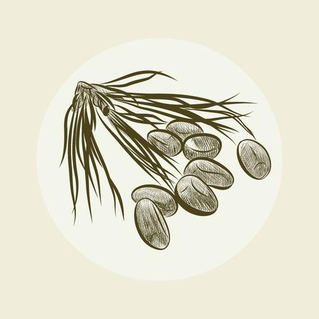 Pine Nut Seamless Pattern