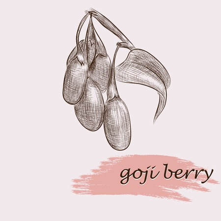 wacom: berries. hand drawing set of vector sketches. draw by Wacom Illustration