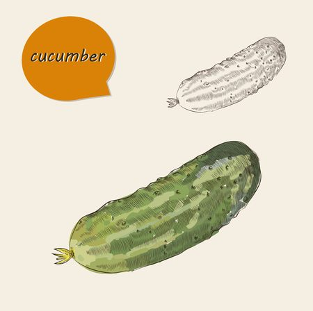 wacom: vector hand draw cucumber set. sketches. draw by Wacom