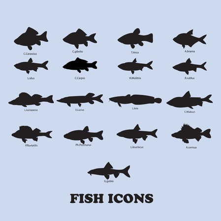 plaice: Collection of fish. vector icons