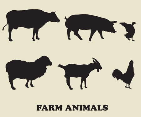 veal: farm animals. vector icons