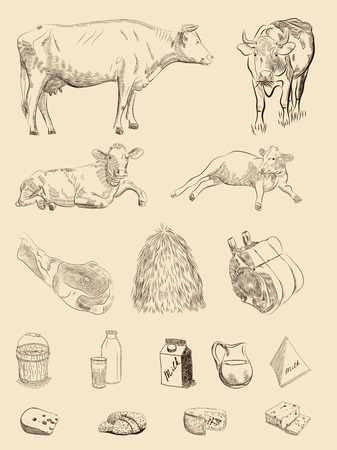 young cow: cows, dairy products and meet set of vector sketches