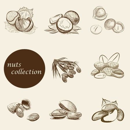 pine nuts: set of nuts collection. vector sketches