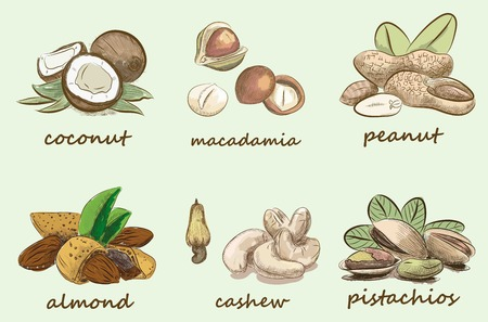 macadamia: colorful nuts set. vectoer sketches