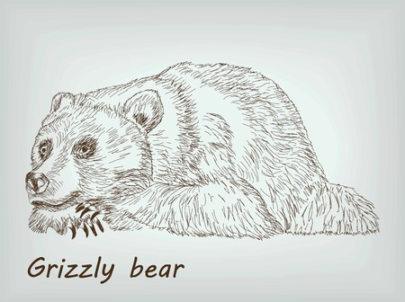 lies: grizzly bear lies on his feet. vector sketch on background
