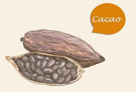 detailed image: Detailed image of colorful cacao Illustration