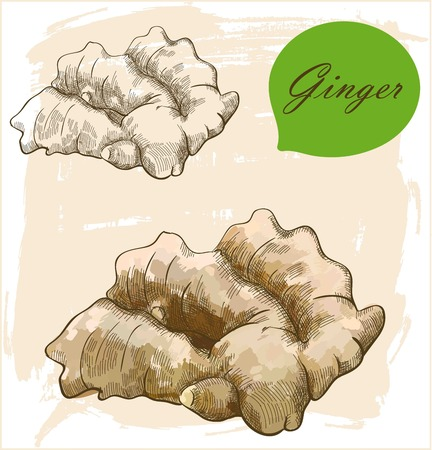 Vintage retro background with hand drawn sketch ginger root