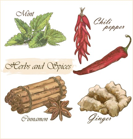 Beautiful colorful herbs and spices set Illustration