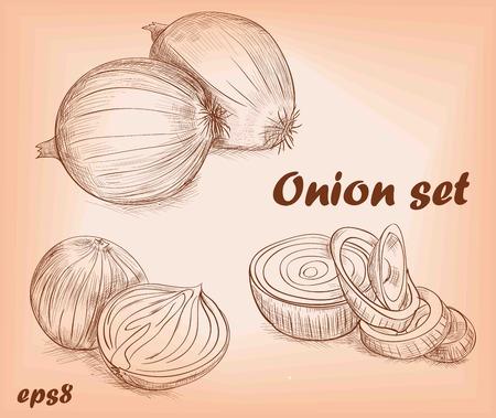 onion slice: set of onion sketches