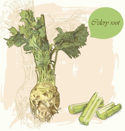celery: Vintage background with hand drawn colorful sketch of celery root