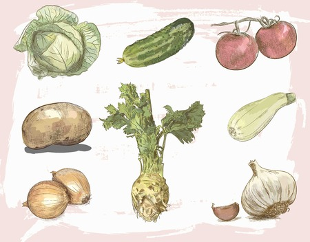 root vegetables: colorful vegetables vector sketches on vintage background