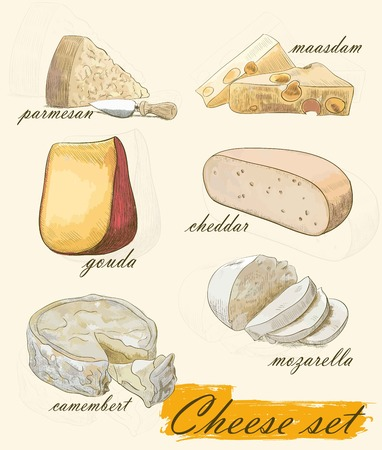 gouda: various types of cheese set of colorful vector sketches on a background Illustration